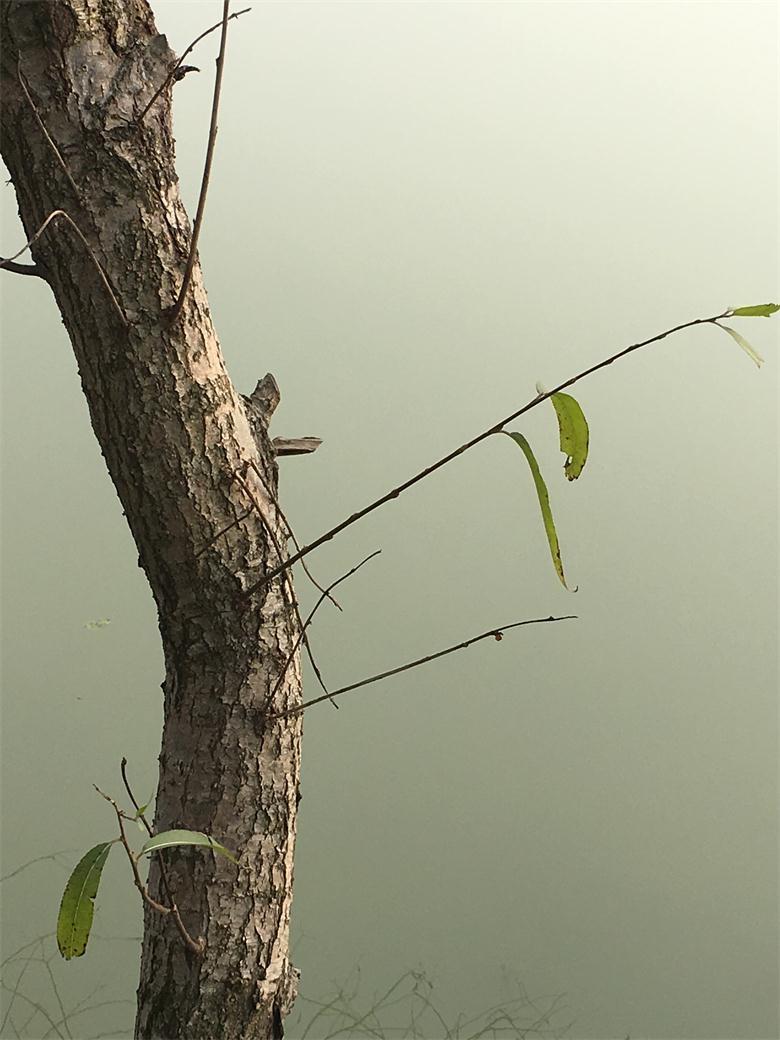鱼塘边的小树