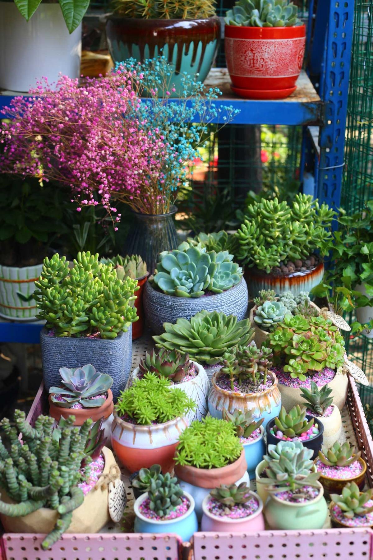 不用出远门,就在家附近的花鸟市场,拍拍几张得了。