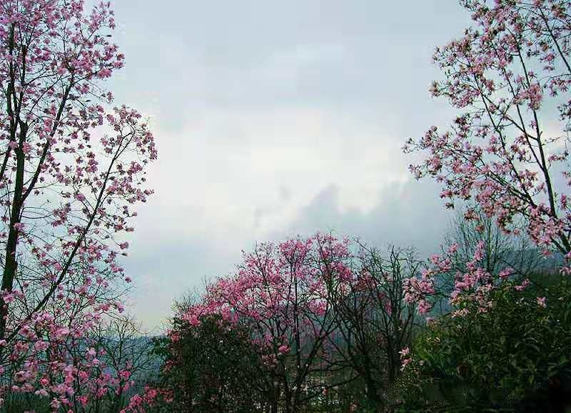 冬天看春天拍的