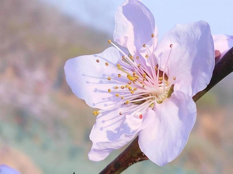 春暖花开 随手拍的