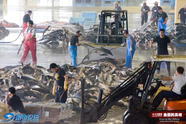 [其它]转帖:屠殺地點正是這次日本大地震海嘯中慘遭大火滅市的氣仙沼市